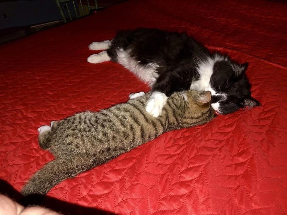due-gatti-sul-letto