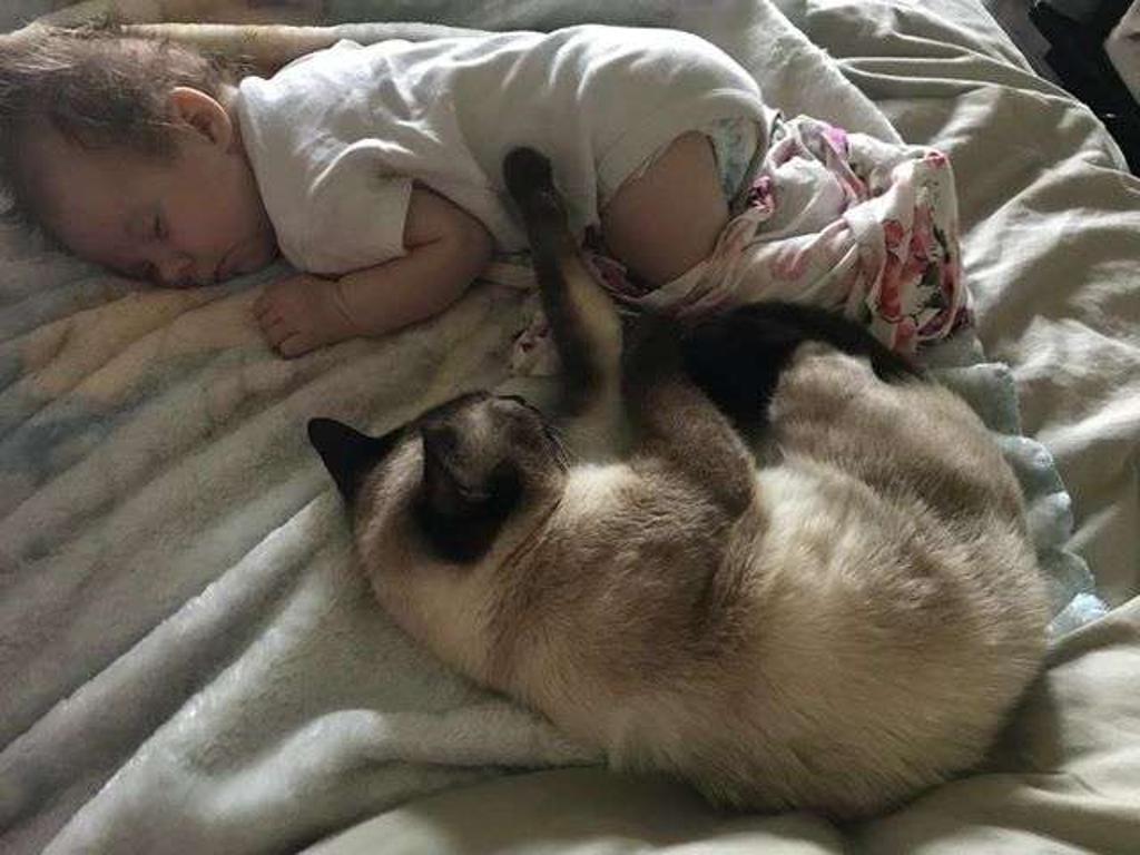 gatta-dorme-con-bambina