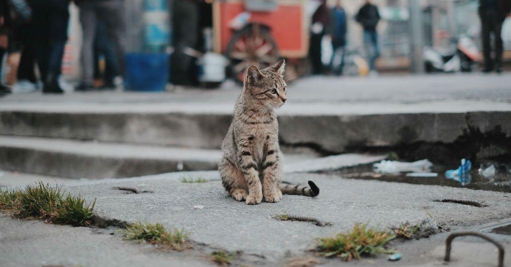 gattino solo