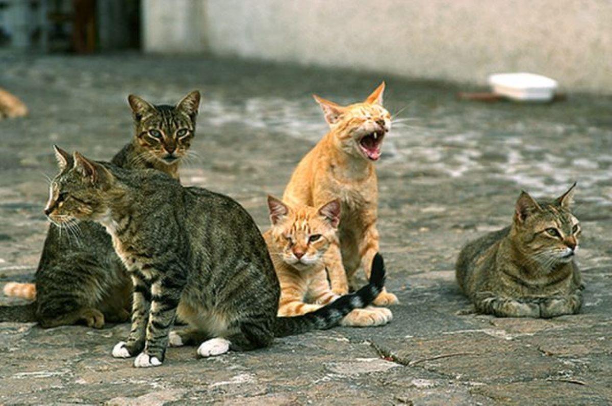 insieme-di-gatti