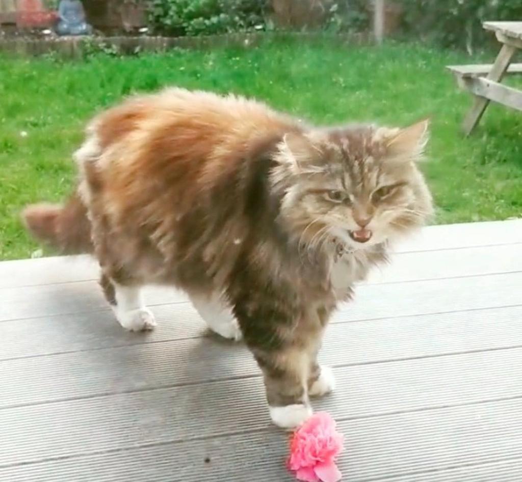 gatto-regala-fiori