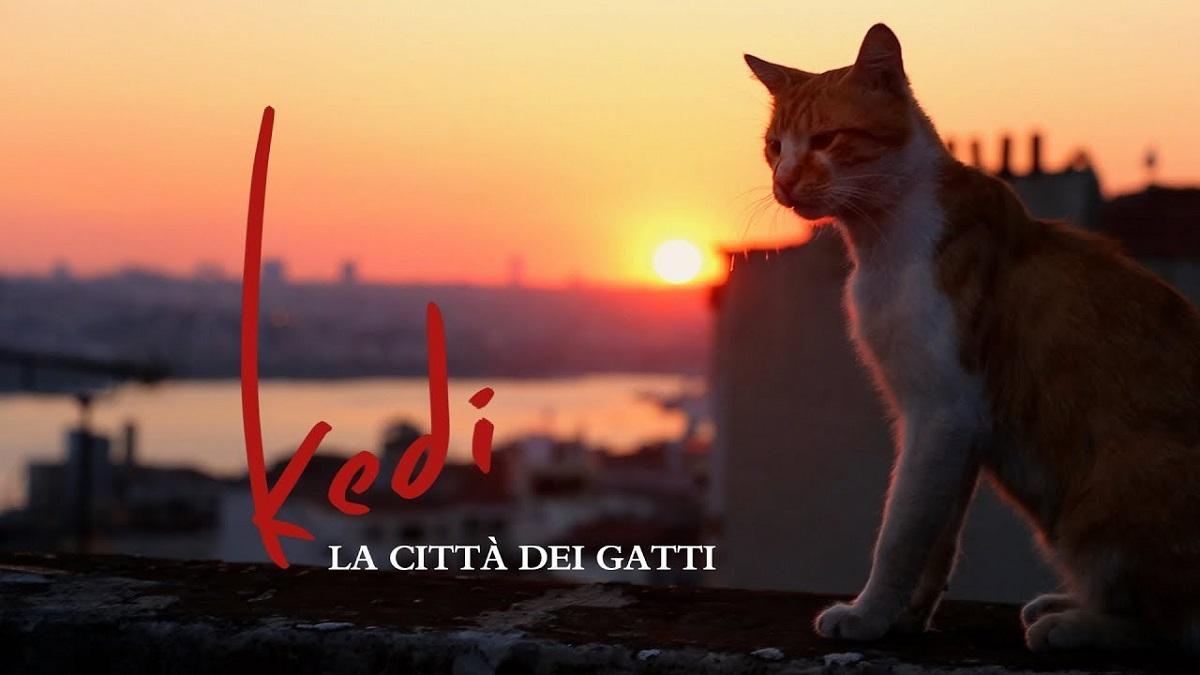 Kedi - gatto sul tetto