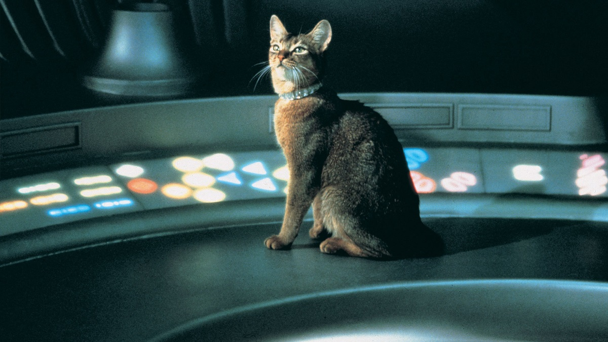 gatto venuto dallo spazio