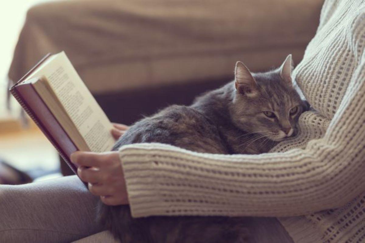 gatto-in-grembo-a-donna