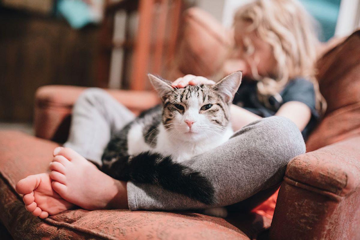 gatto-vicino-a-bambina