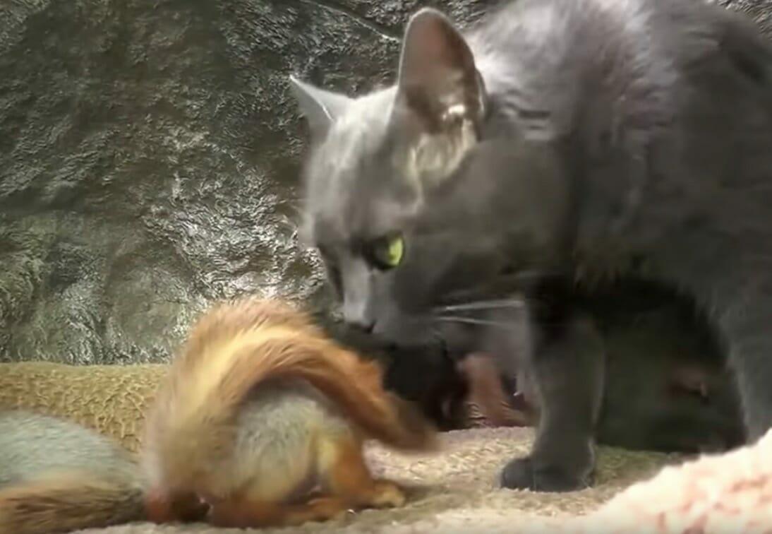gatta-annusa-scoiattolo