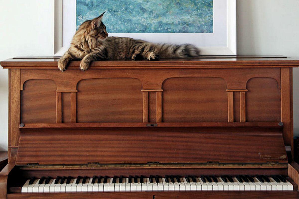 gatta-su-pianoforte