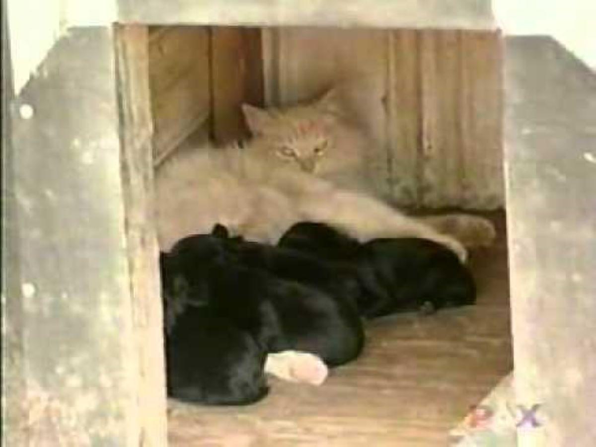 gatta-con-cagnolini
