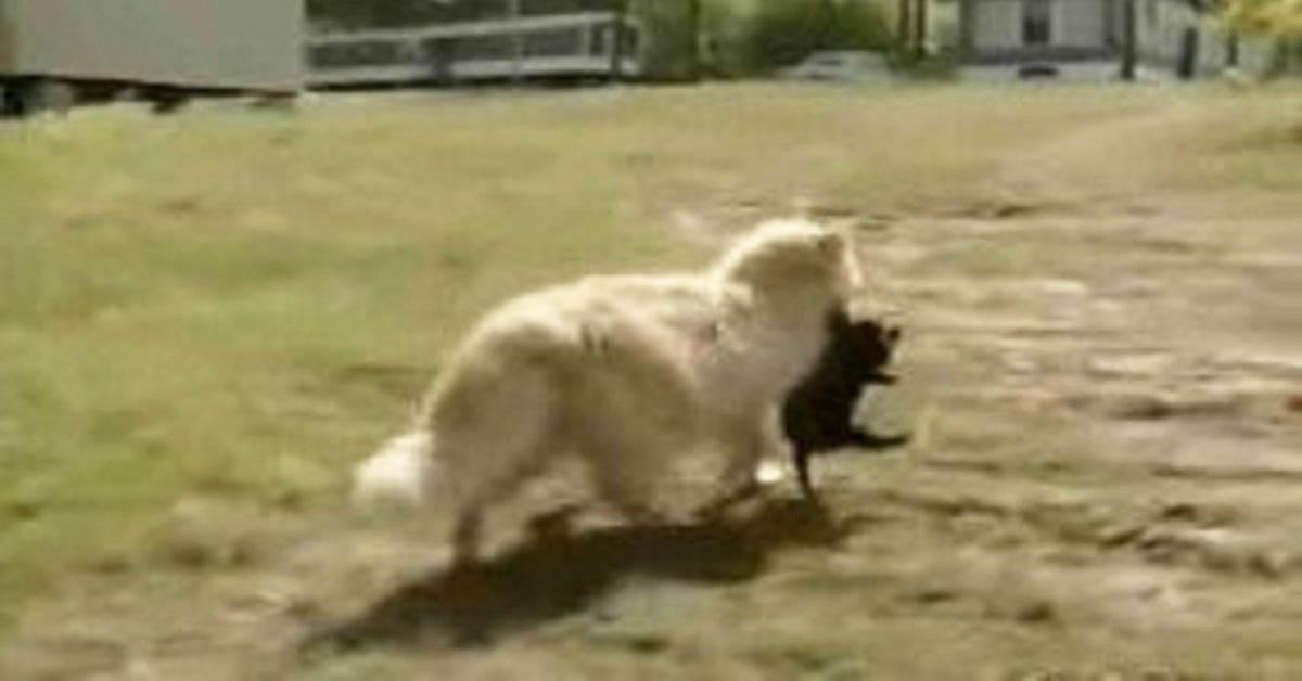 gatta-con-cucciolo-di-cane-in-bocca