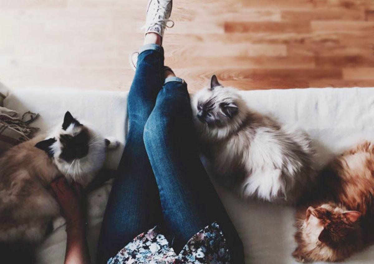 gatti-su-poltrona