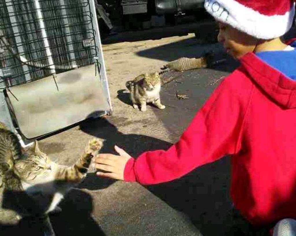 gatti-con-bambino