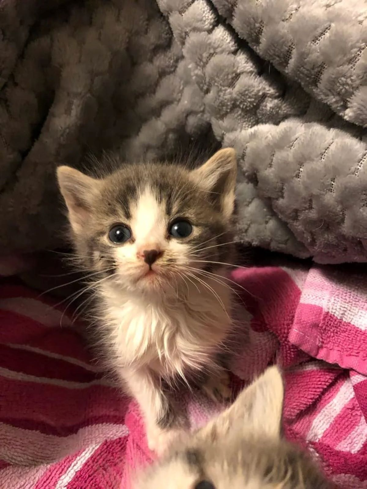 gattino-vicino-ad-asciugamano