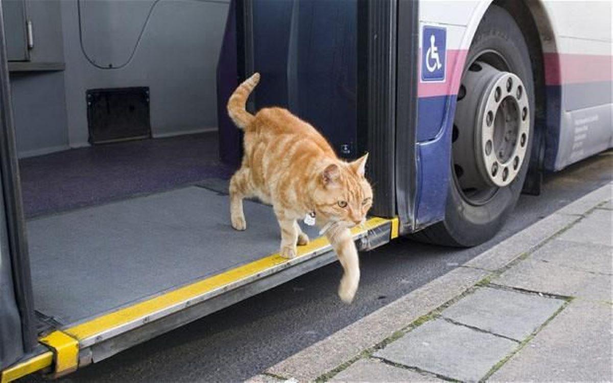 gatto-che-scende-da-autobus