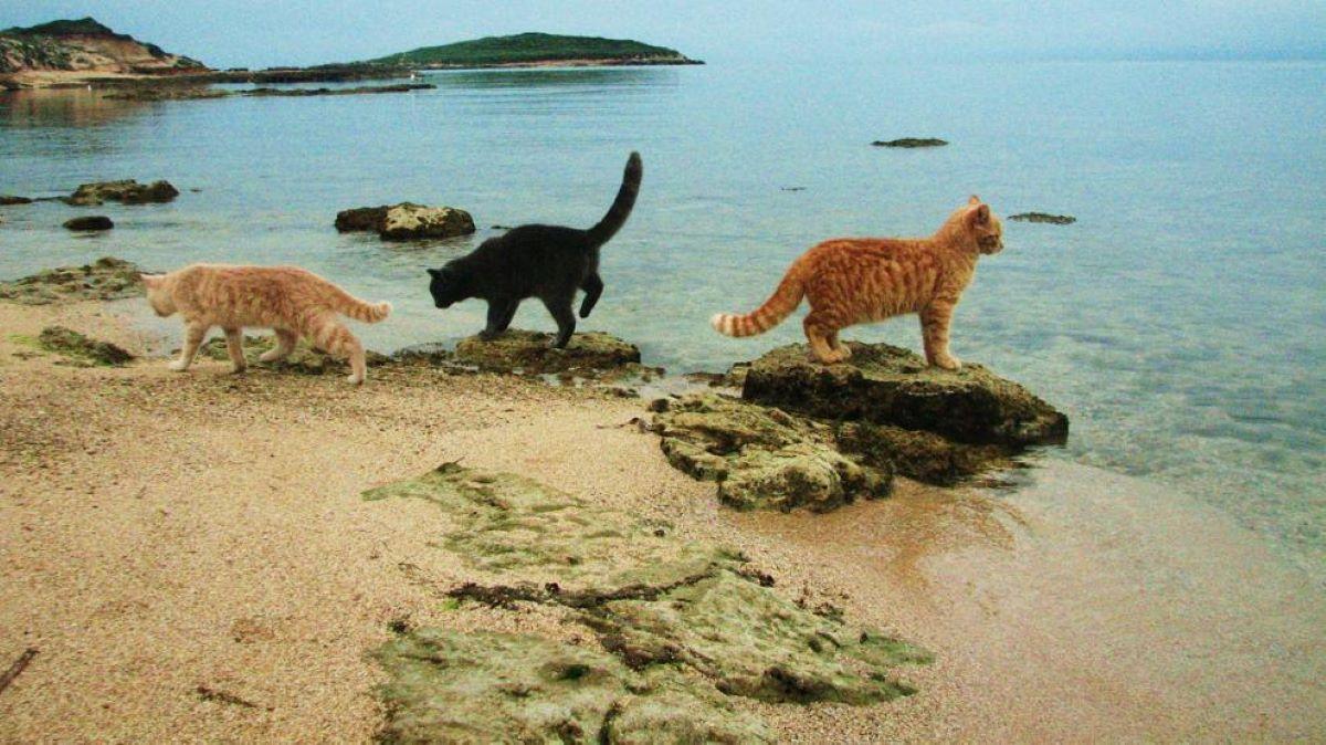 gatti-che-guardano-il-mare
