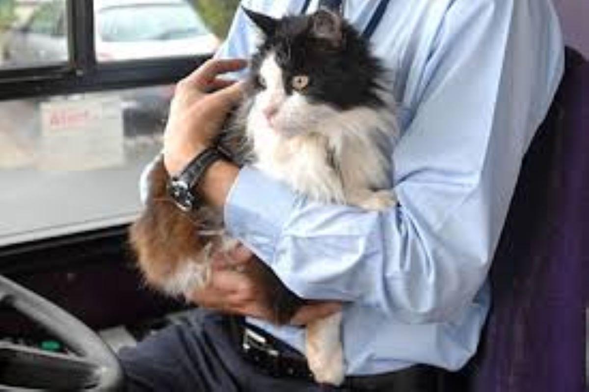 gatto-in-braccio-ad-autista