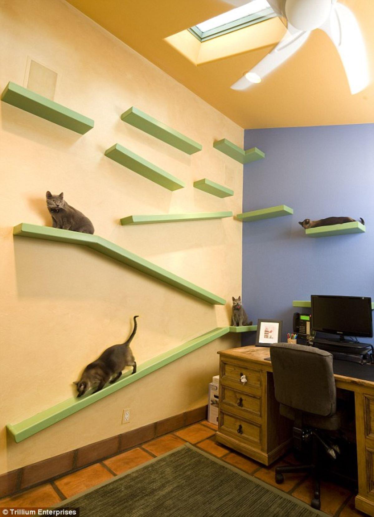 gatti-con-mensole