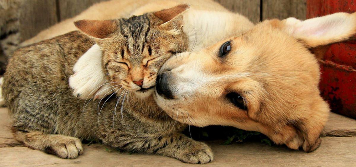 gatto-e-cane-insieme