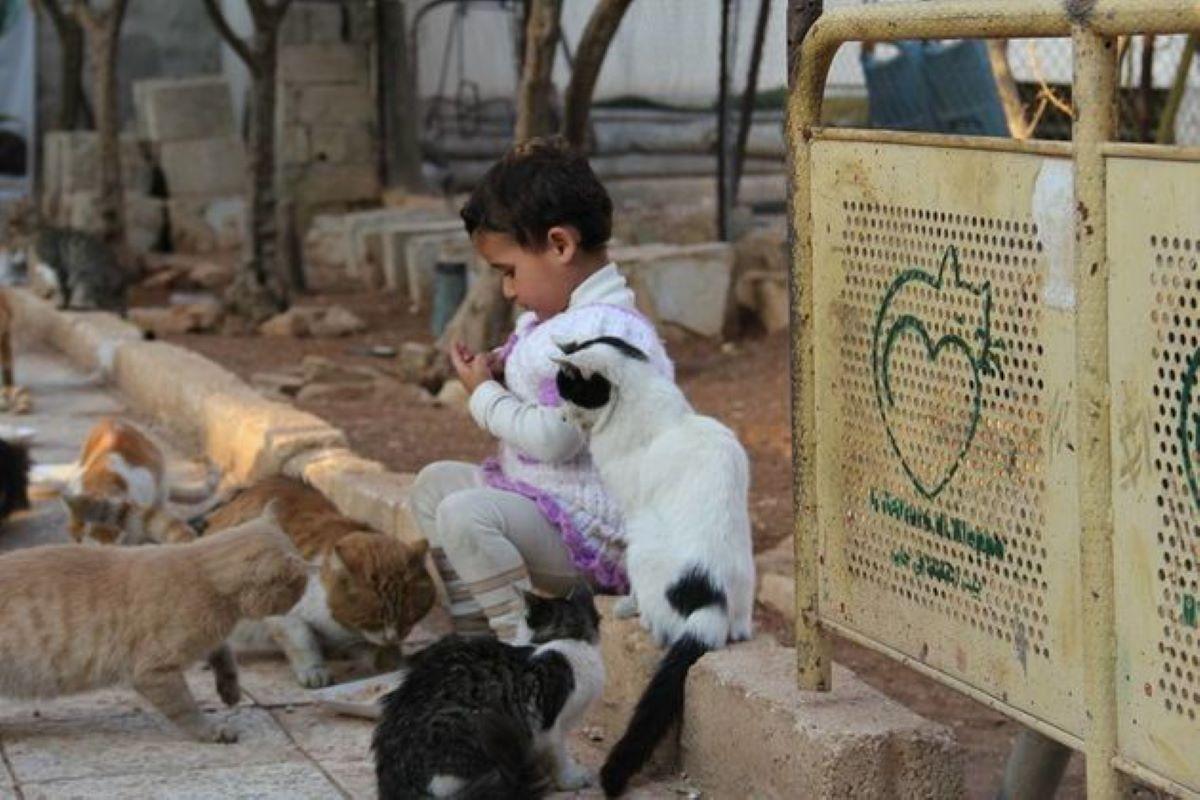 bambino-con-molti-gatti