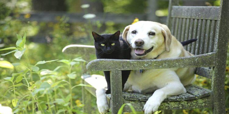 gatto-e-cane-su-panchina