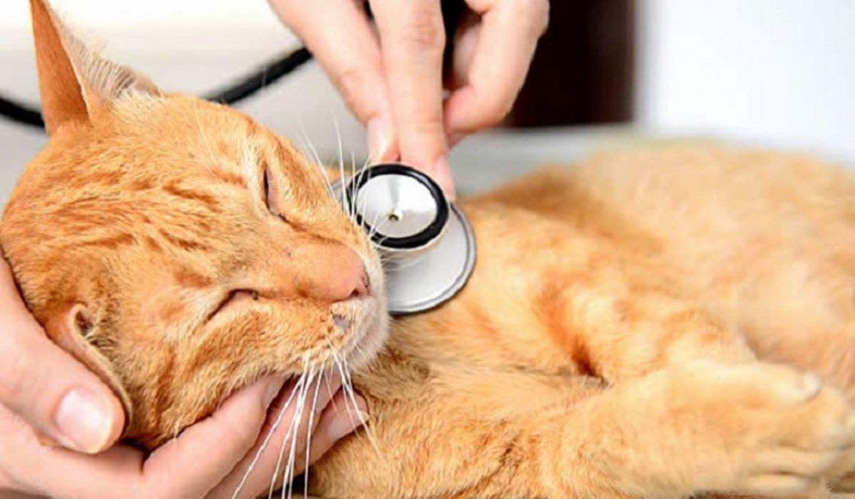 gatto-dal-veterinario