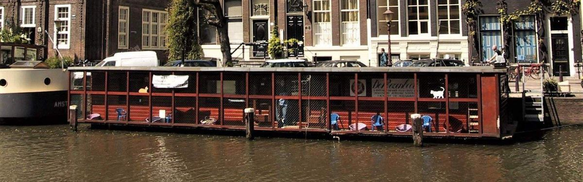 barca-con-gatti-su-canale