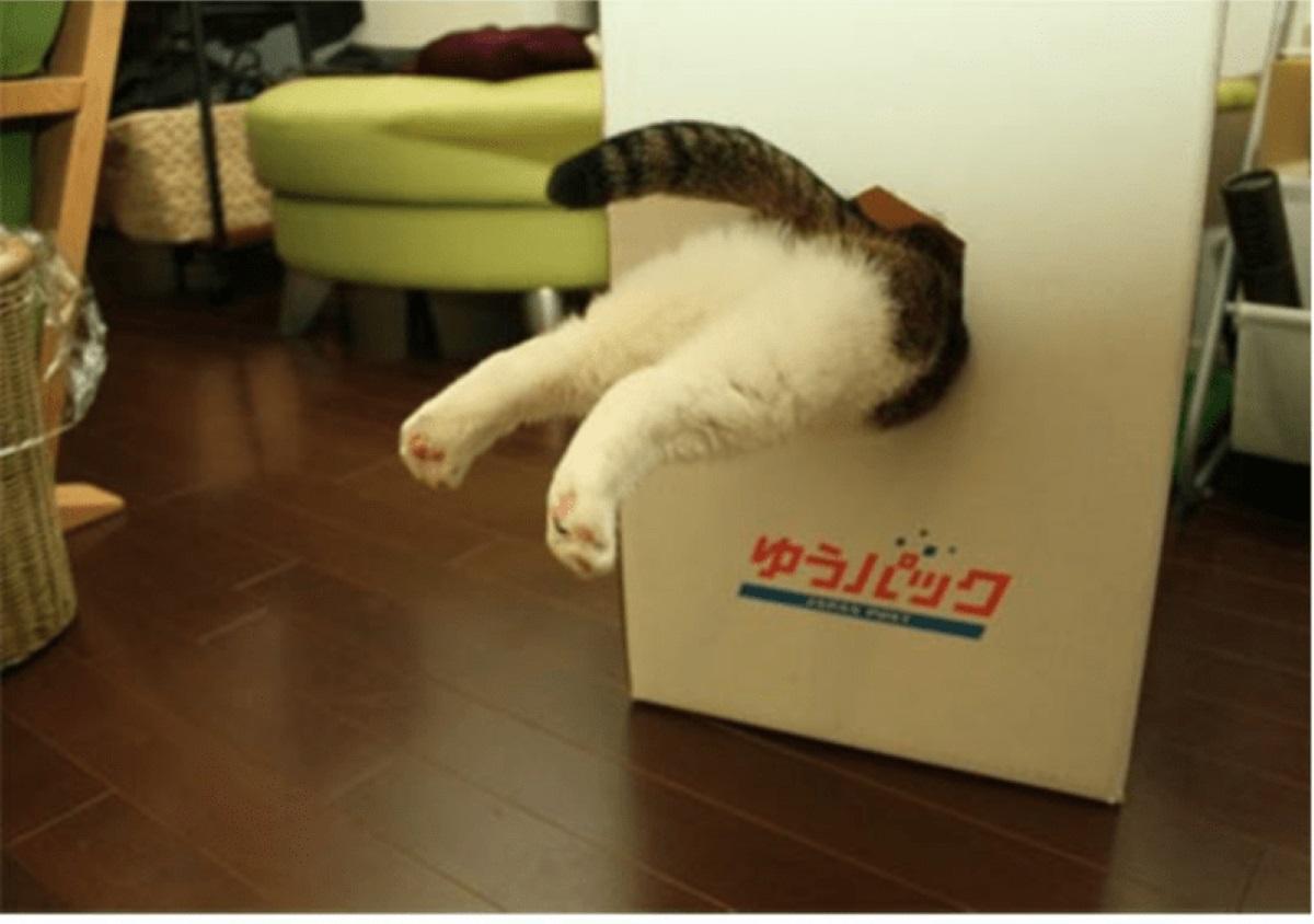 zampe-gatto-che-escono-da-una-scatola