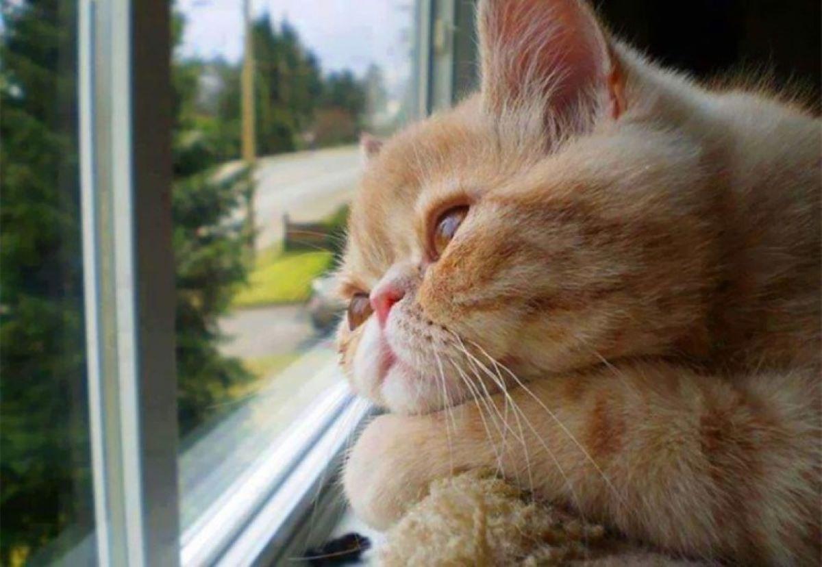 gatto-che-osserva-fuori-dalla-finestra