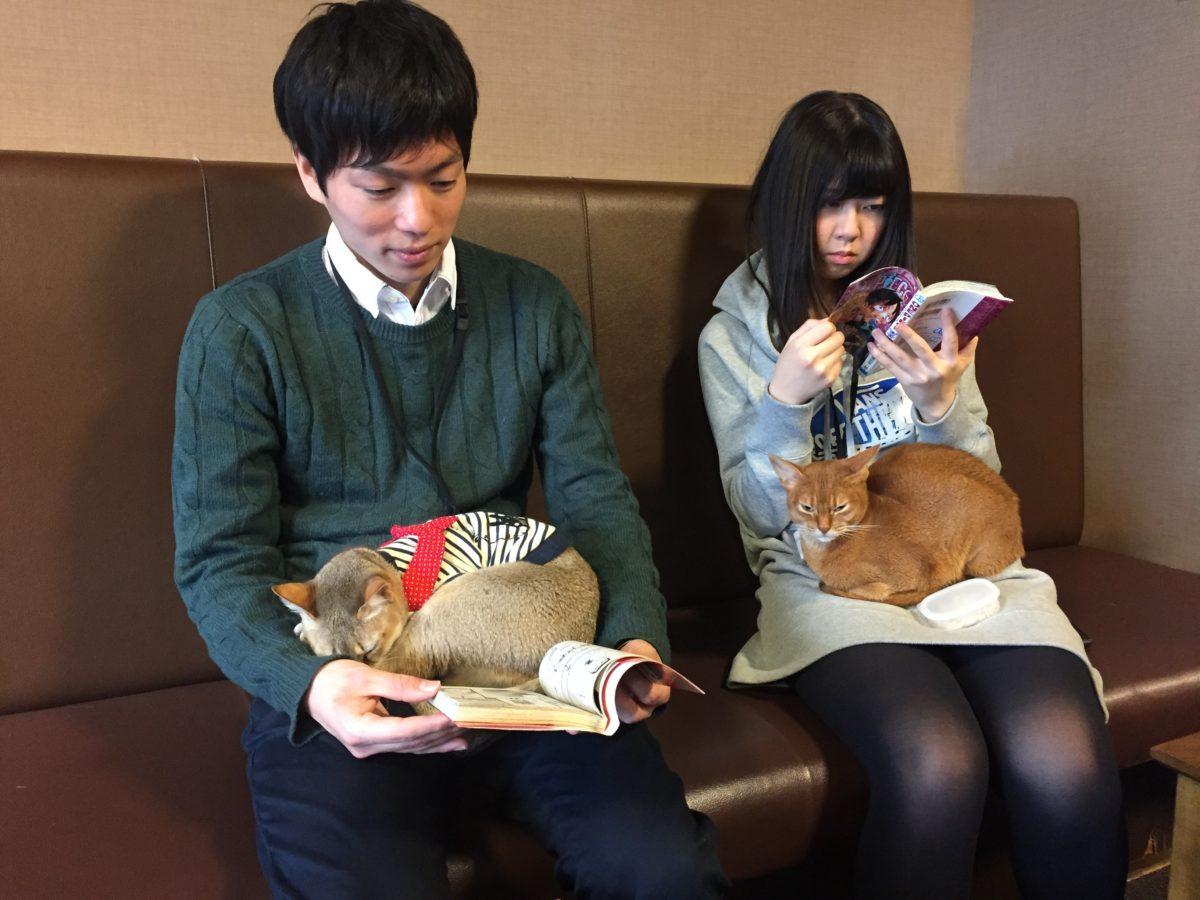 giapponesi-con-gatti