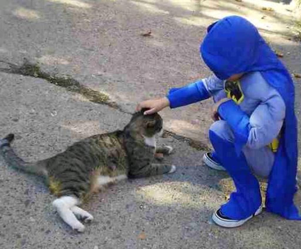 gatto-con-bambino-vestito-da-supereroe