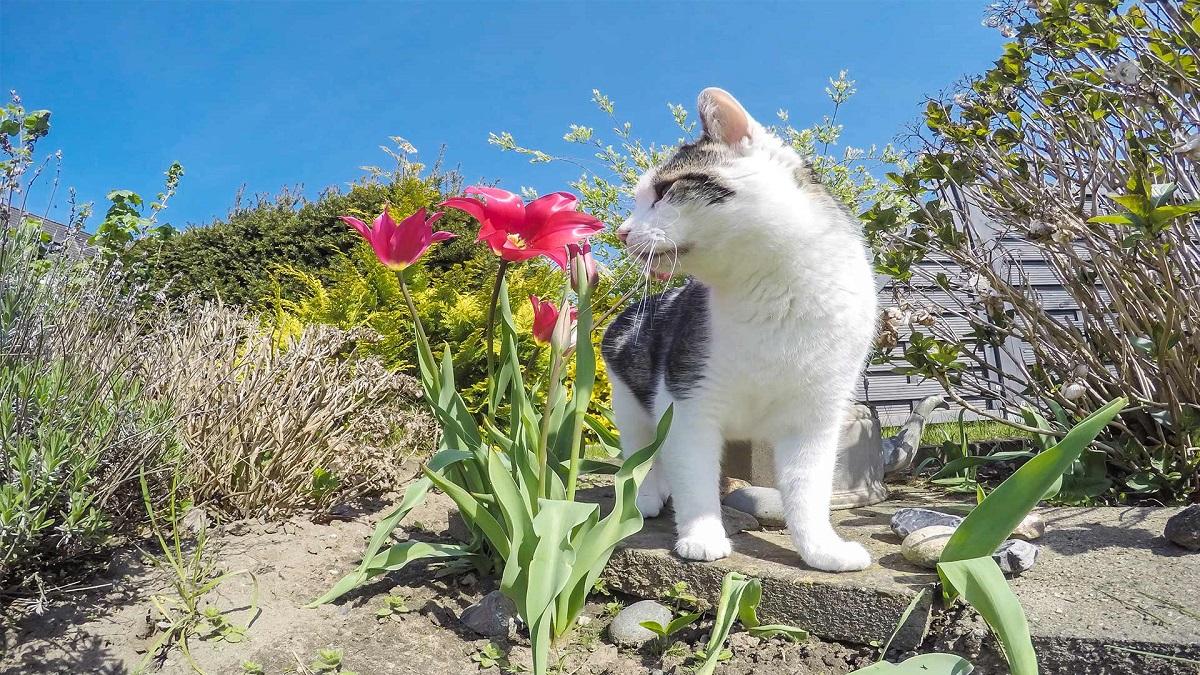 gatto vicino a fiore