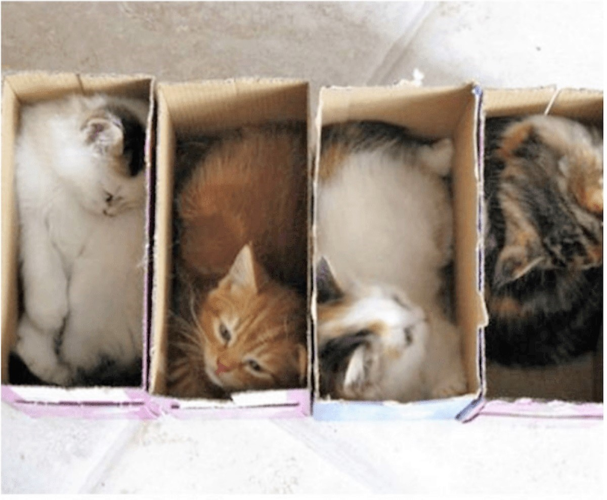 gattini-nelle-scatole