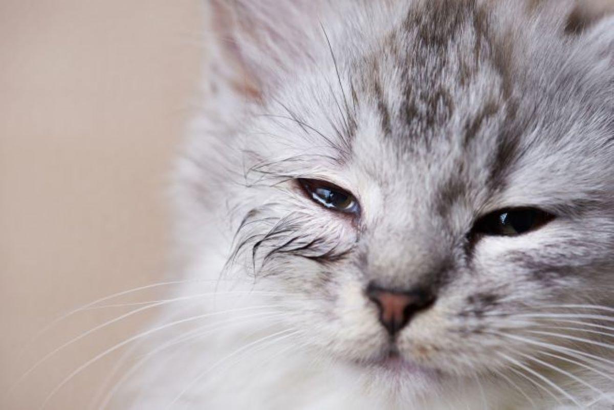 gatto-con-occhi-tristi