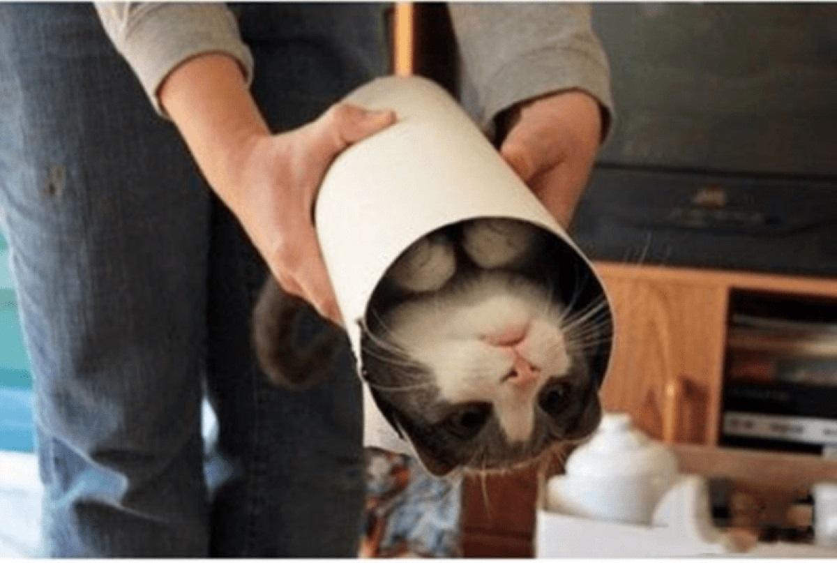gatto-arrotolato