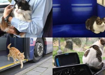 gatti-seduti-su-autobus