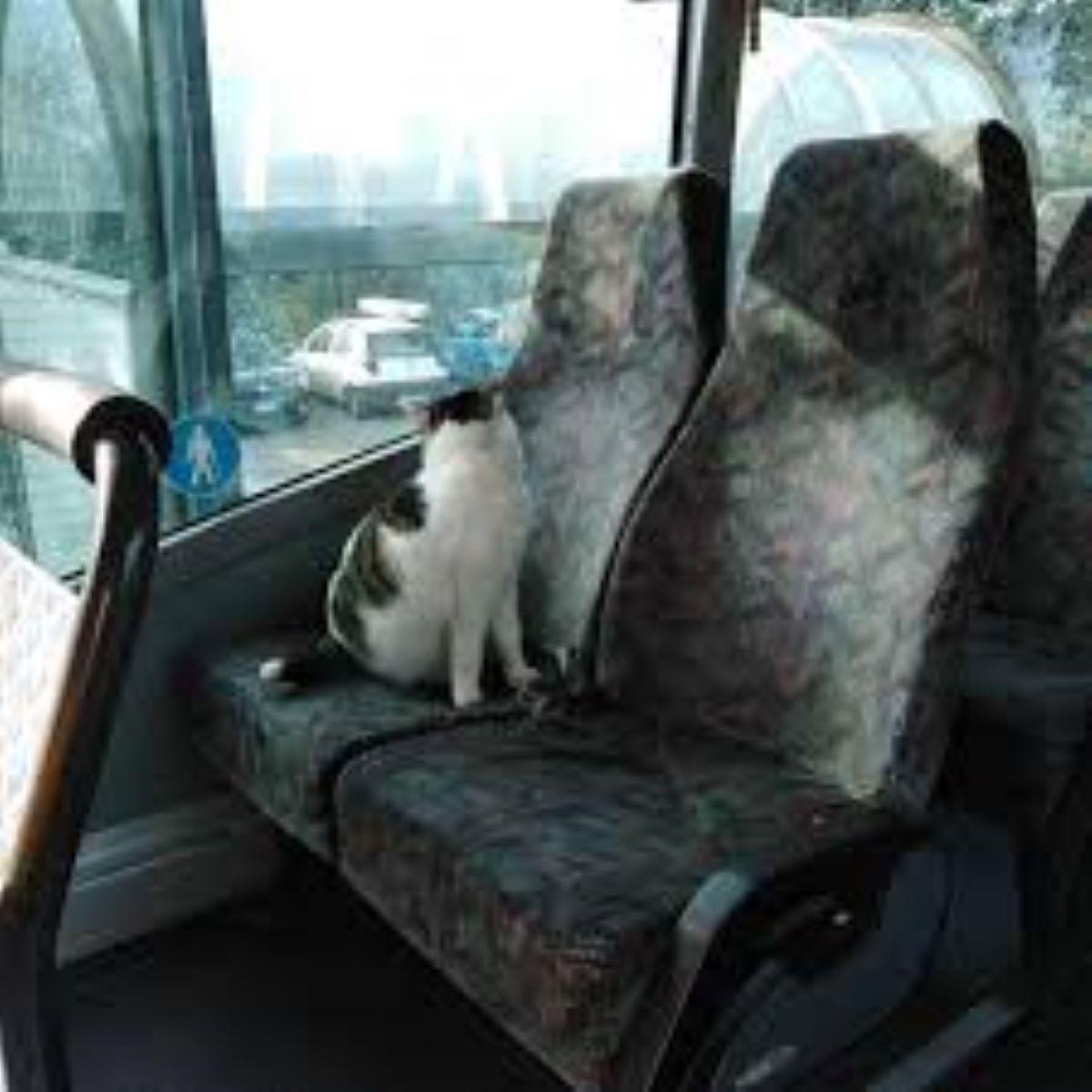 gatto-su-sedile-autobus