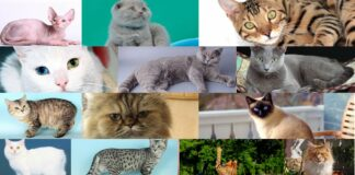 Gatti più costosi del mondo