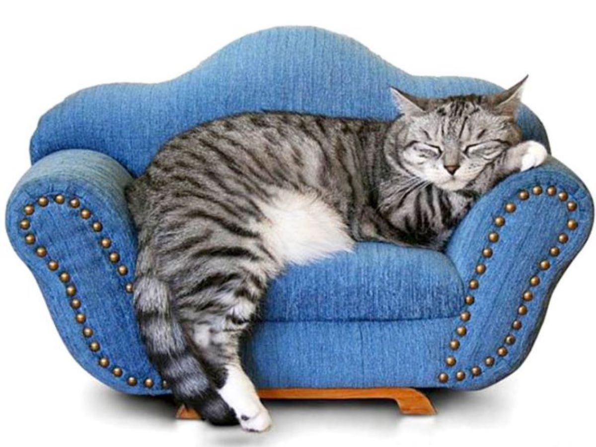 gatto-che-dorme-sul-divano