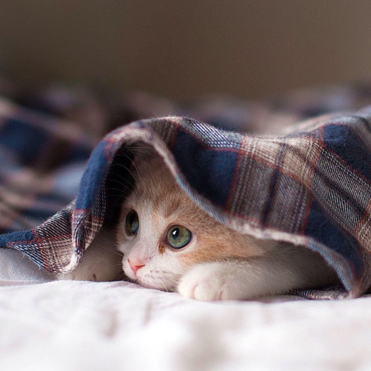 gatto-spaventato