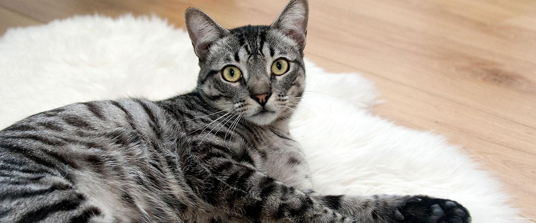 gatto riconosce il nome