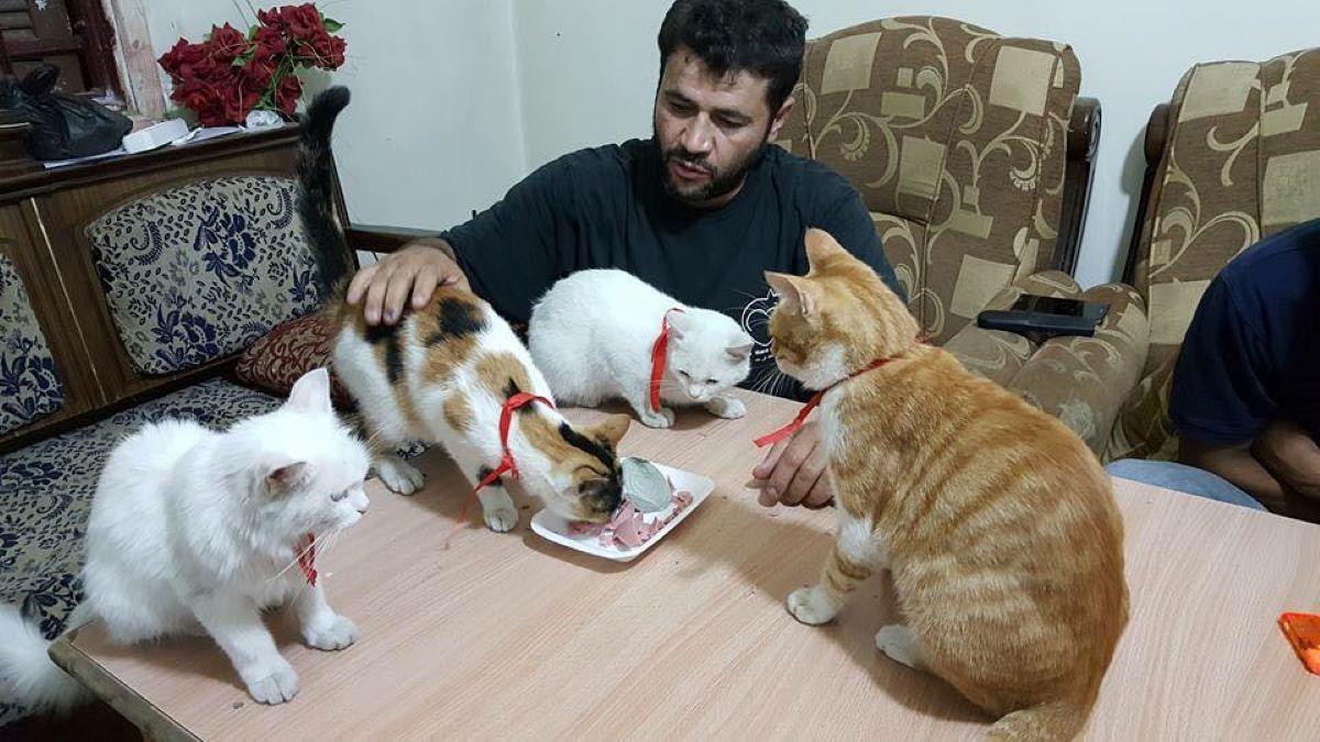 gatti-che-mangiano-sul-tavolo