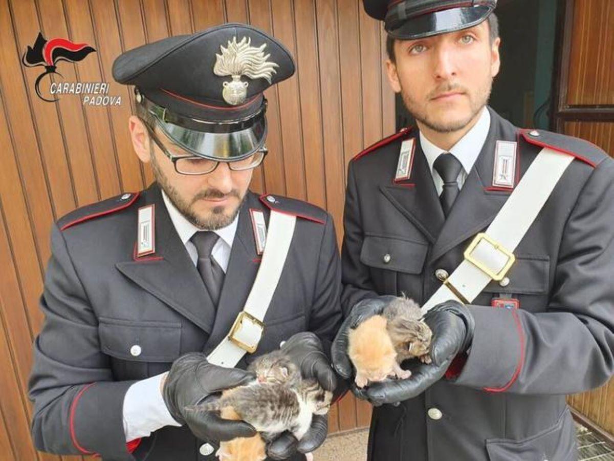 carabinieri-con-gattini