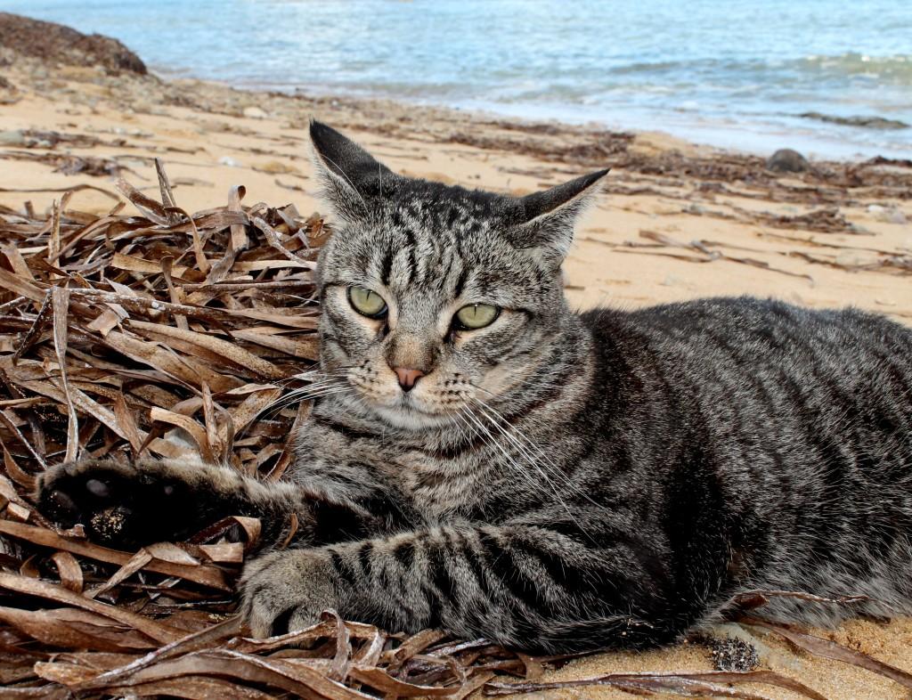 gatti-in-spiaggia