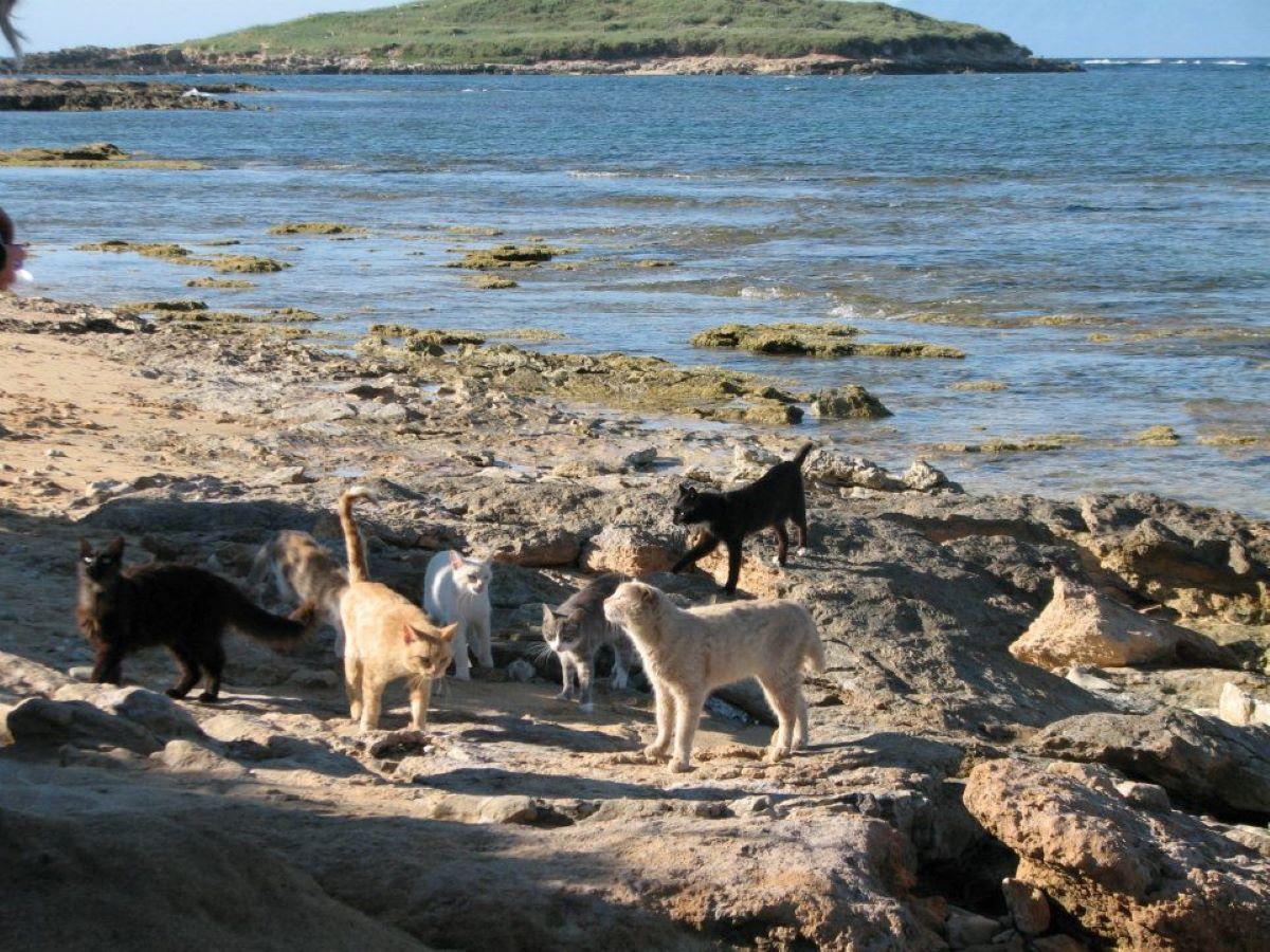 gatti-vicino-al-mare