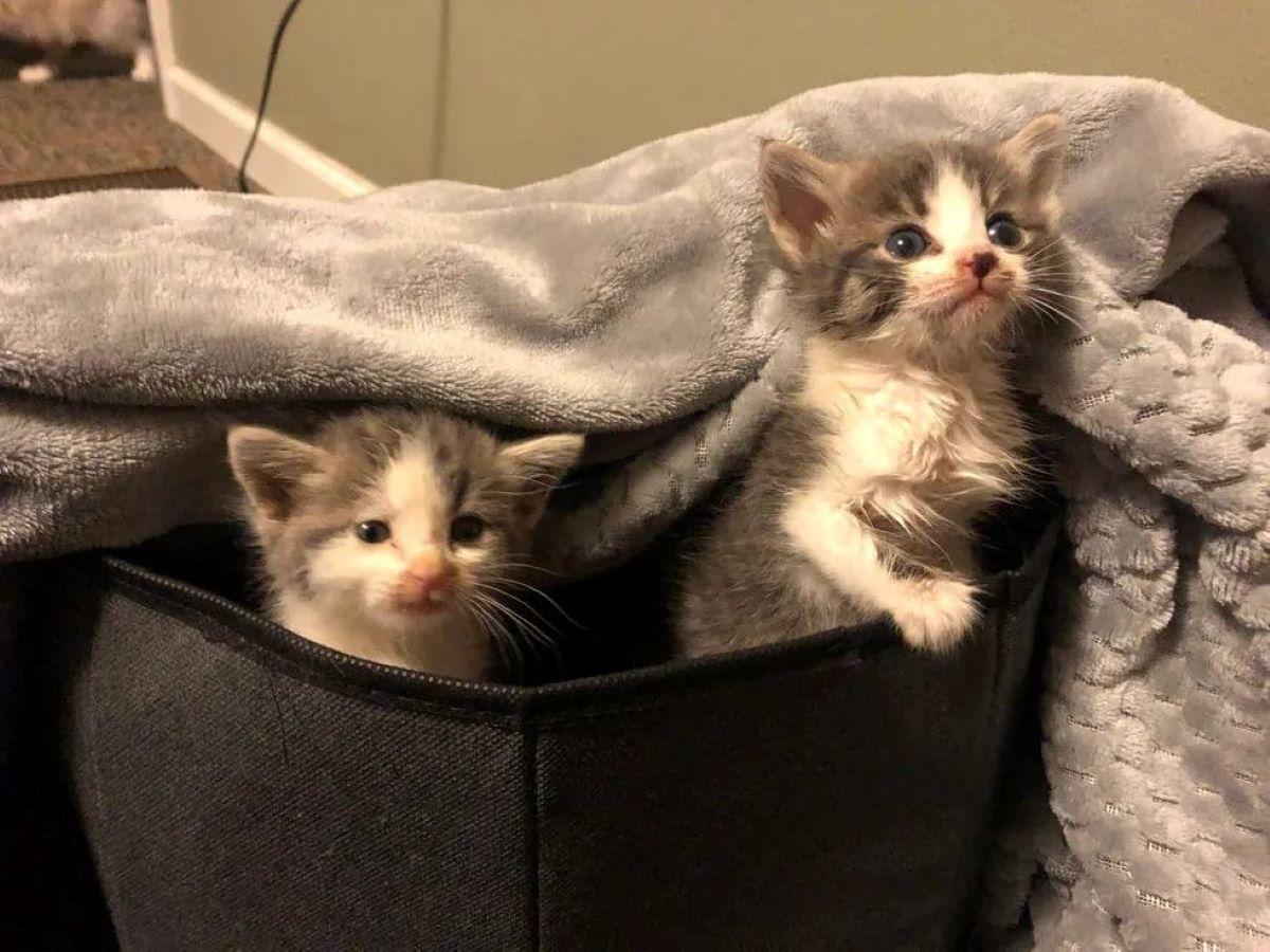gatti-in-una-cesta