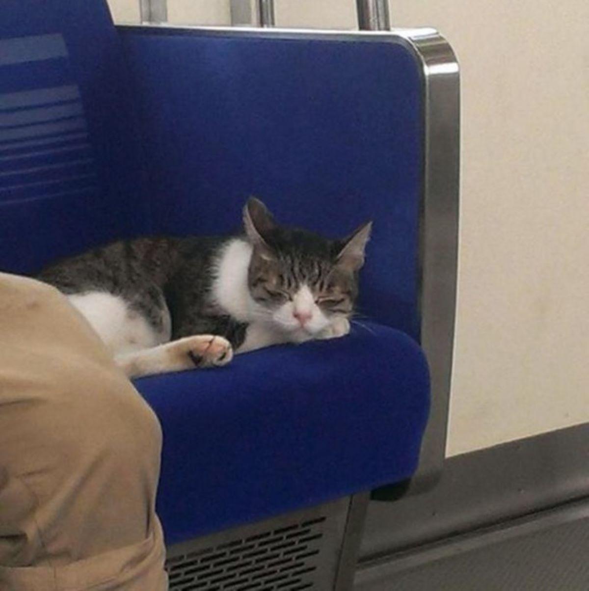 gatti-su-sedile-metro