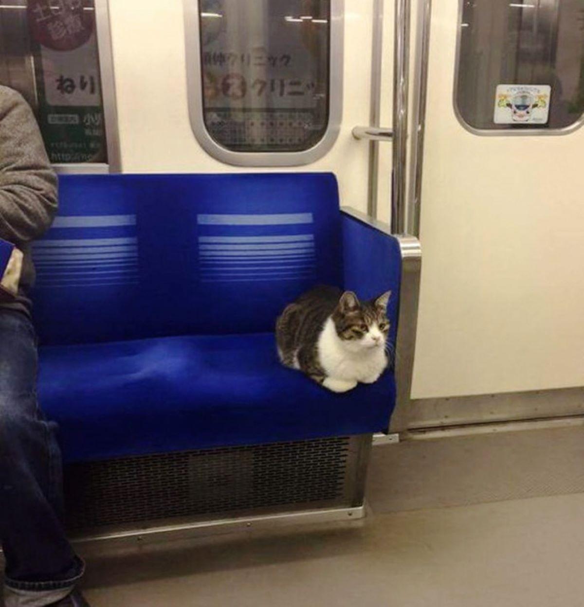 gatto-in-metro
