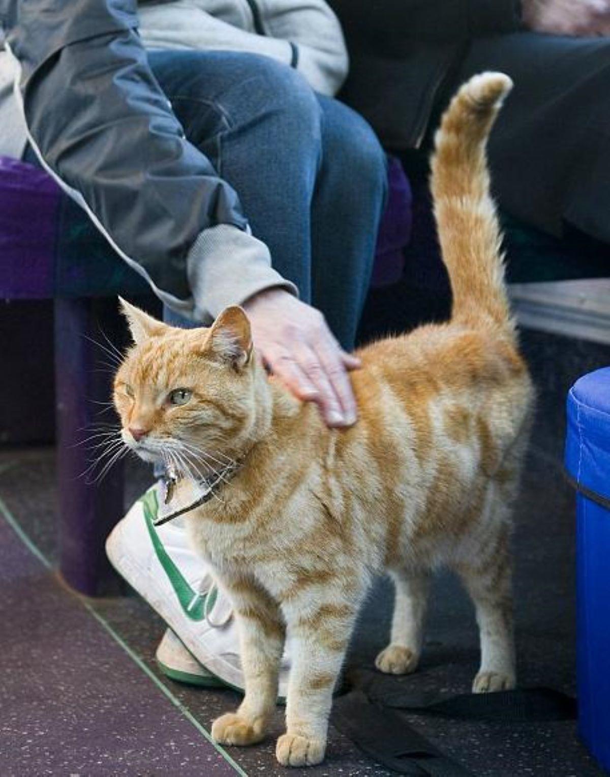 gatto-tigrato-dentro-autobu