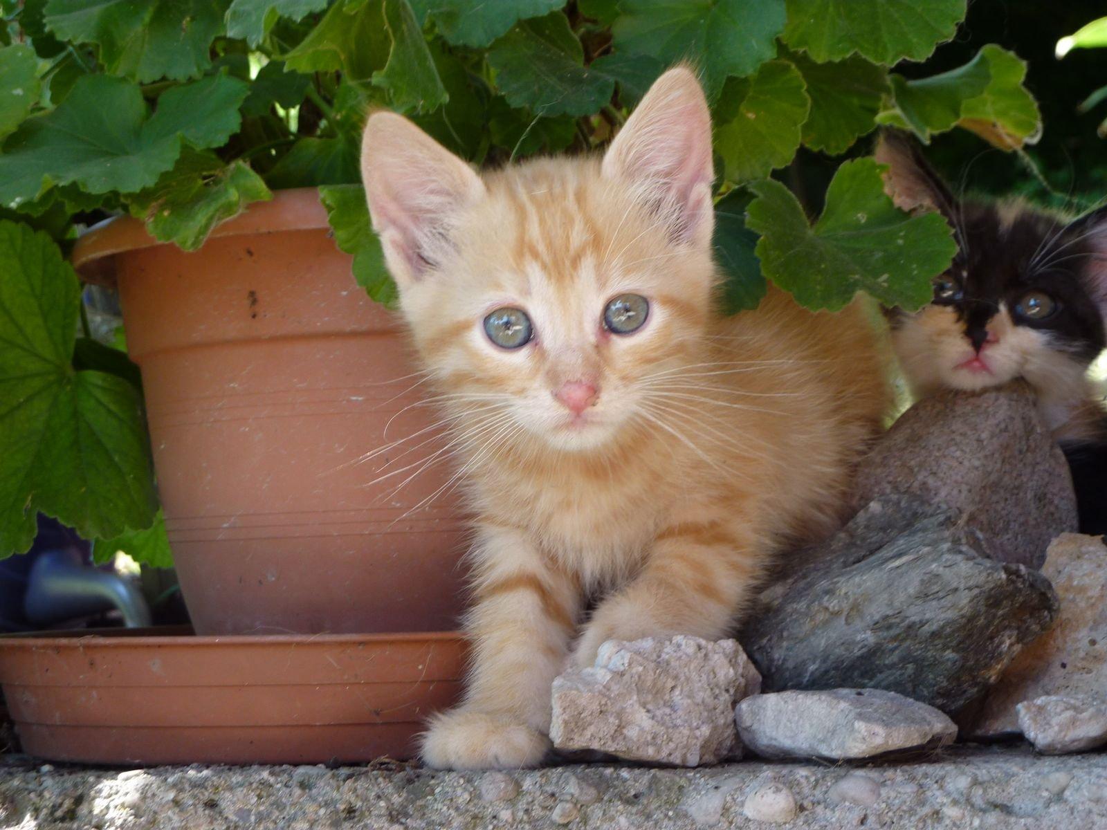 gattino sbuca dal vaso