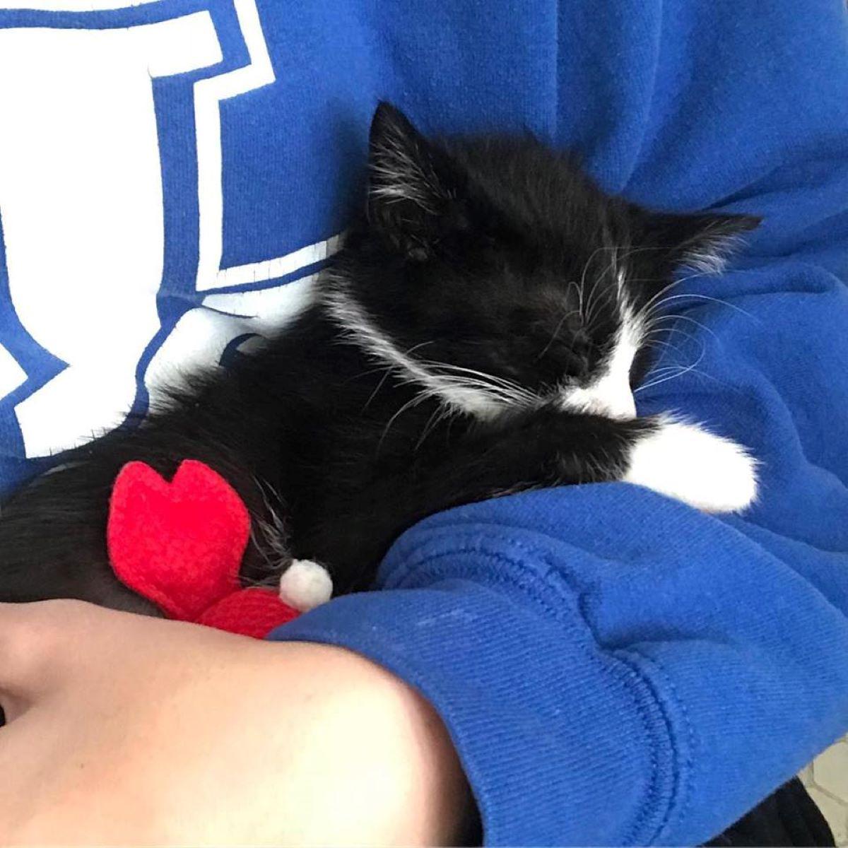 gattino-che-dorme-in-braccio
