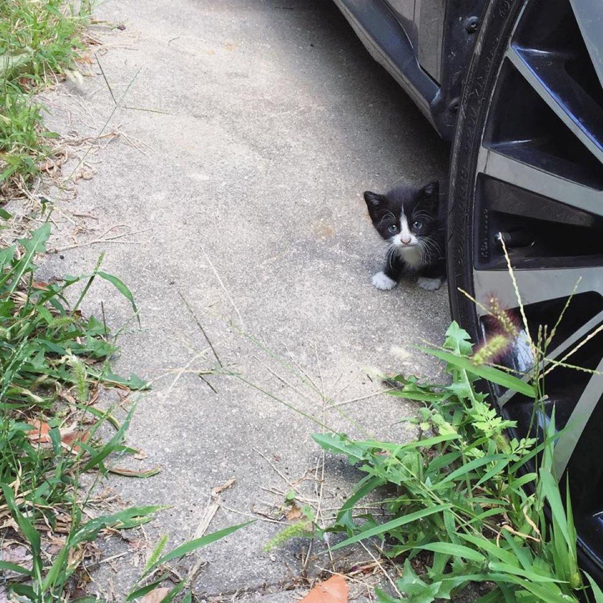 gattino-vicino-a-macchina